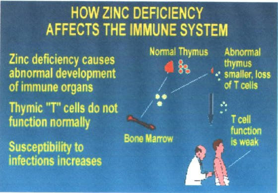 Fitneass Vitamin C And Zinc Help Immunity System