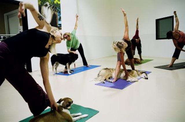Doga-class weird fitness workouts