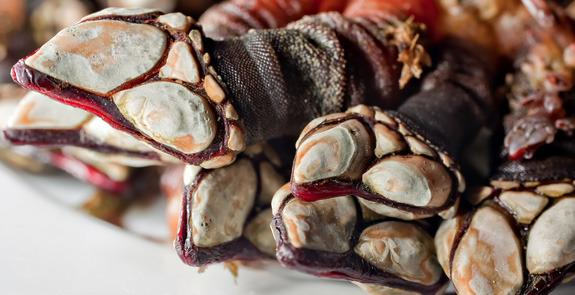 Weird foods: Percebes