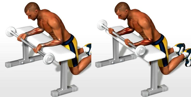 Wrist curls with barbell