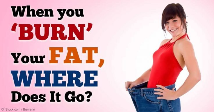 When you burn your fat, where does it go?