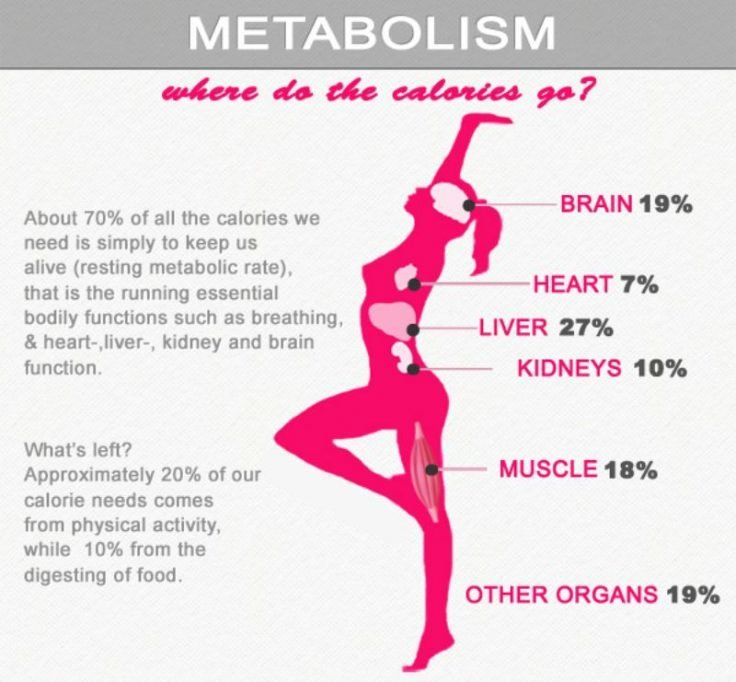 Metabolism And Where Do All The Calories Go - Fitneass