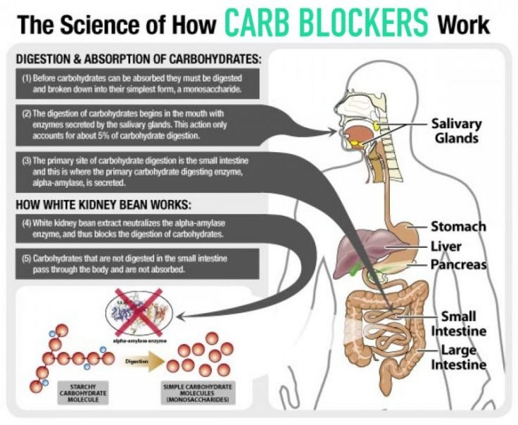 How Carb Blockers Work