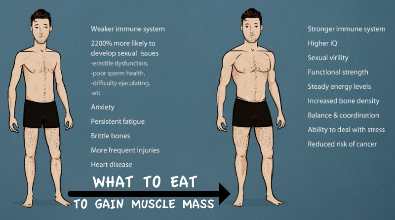 How Much Should I Eat Per Day To Gain Muscle Mass?