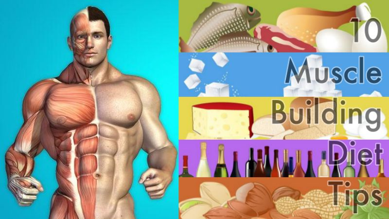 10 Muscle Building Diet Tips