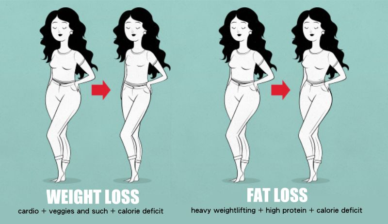 Weight Loss And Fat Loss