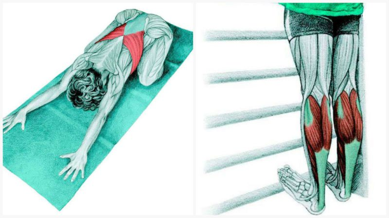 34 Yoga Stretches And Main Muscles Involved