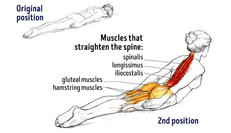 Back Extensions For Perfect Posture