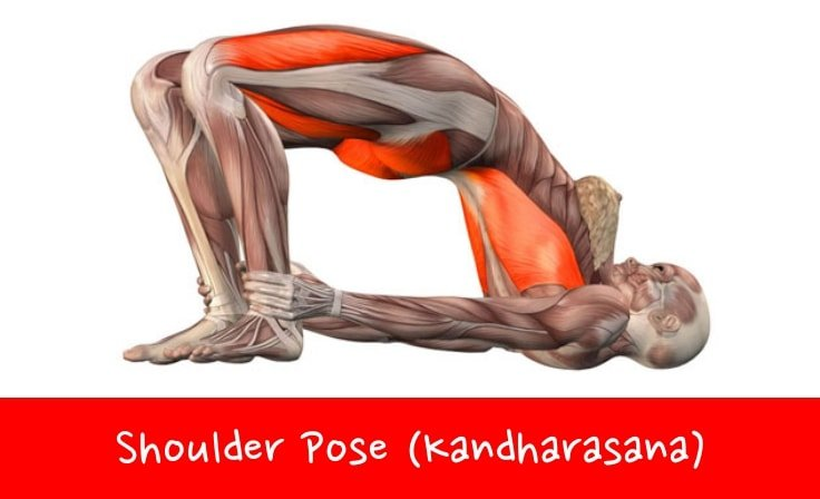 Yoga Poses For Lower Back Pain Relief #2 Shoulder Pose (Kandharasana)