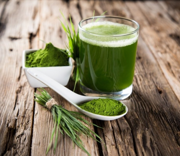 Appetite Suppressant Foods - Wheatgrass