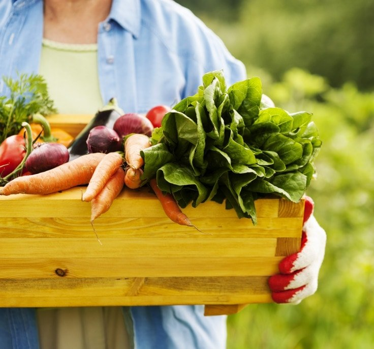 Clean Eating Starts With Organic Food