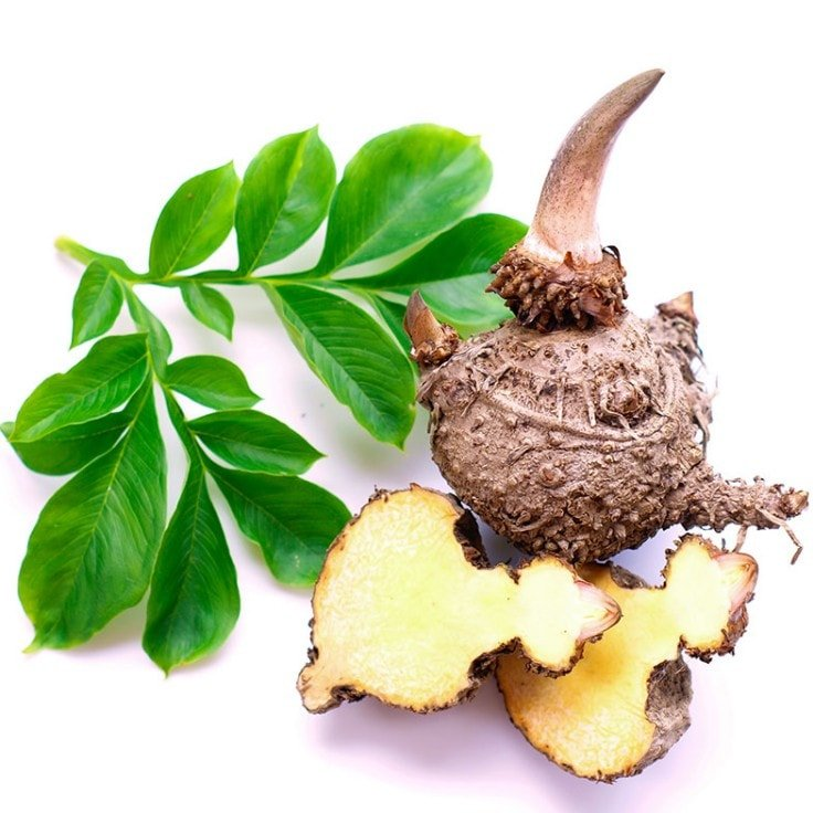 Weight Loss Ingredients - Konjac Root