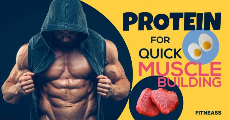How Much Protein Do You Need For Quick Muscle Building