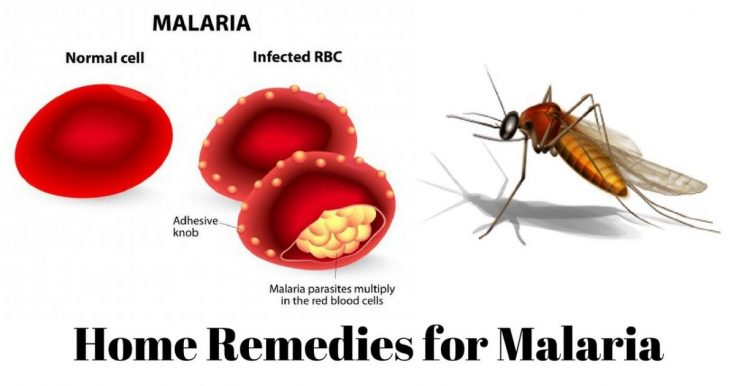 Malaria Treatment And Home Remedies