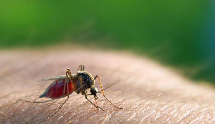 Malaria Treatment At Home