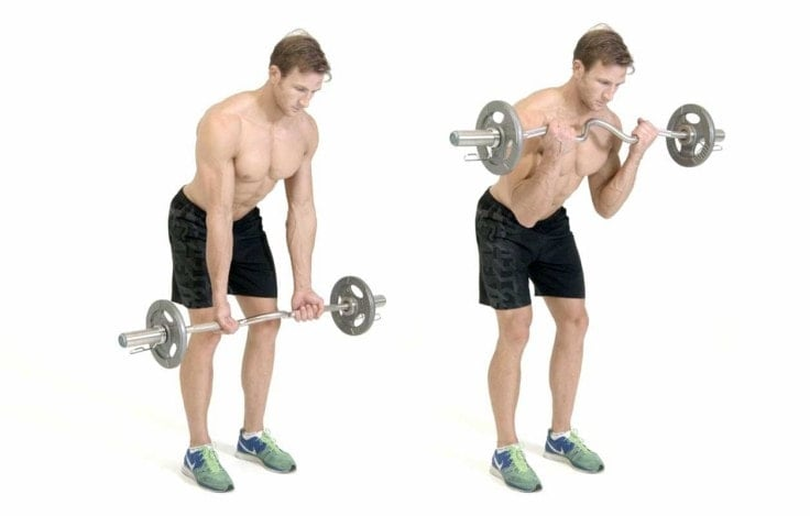 Best Full Body Exercises - EZ Bar Bicep Curls