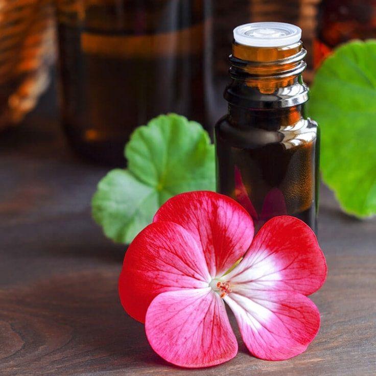 Geranium Essential Oil To Treat Adrenal Fatigue