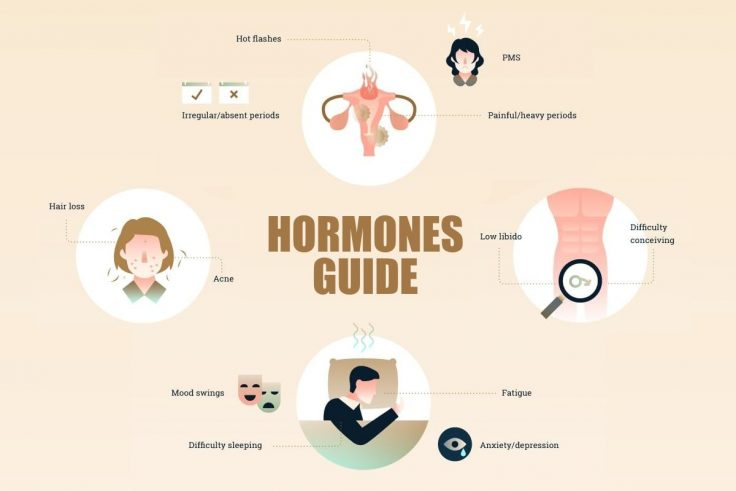 Hormones Guide