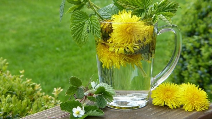 Belly Fat Burning Drinks - Dandelion Tea