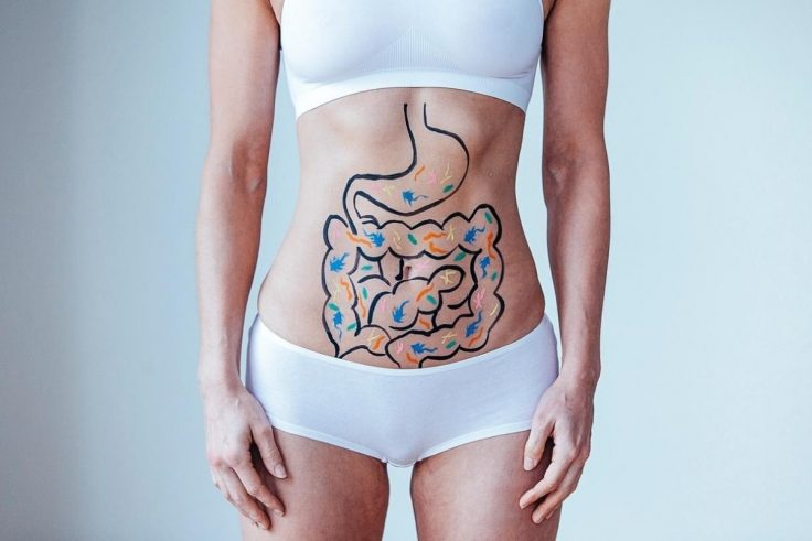 Everything You Need To Know About Gut Health