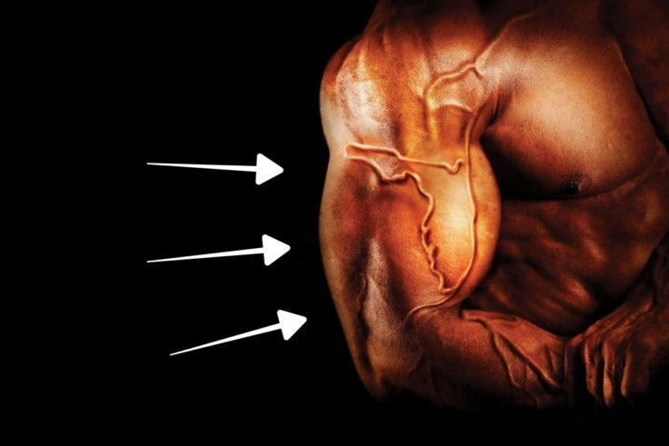 11 Steroid FAQs And Buying Guide