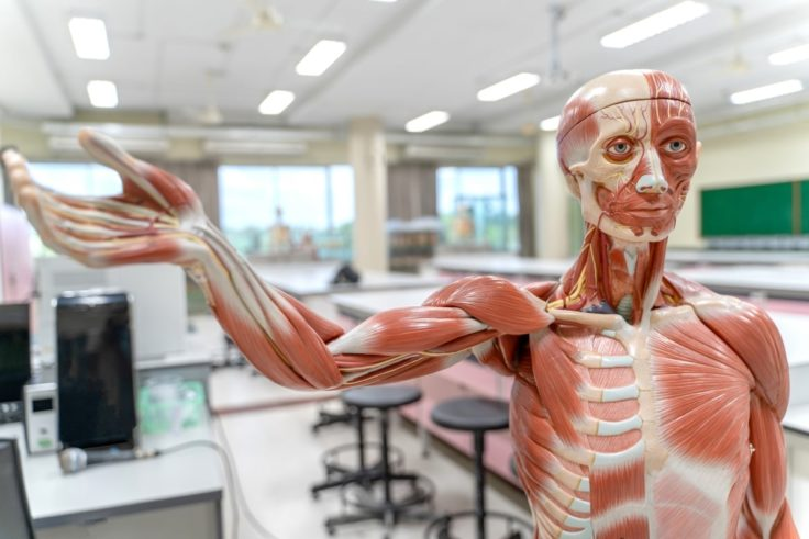 Taking A Human Anatomy And Physiology Course