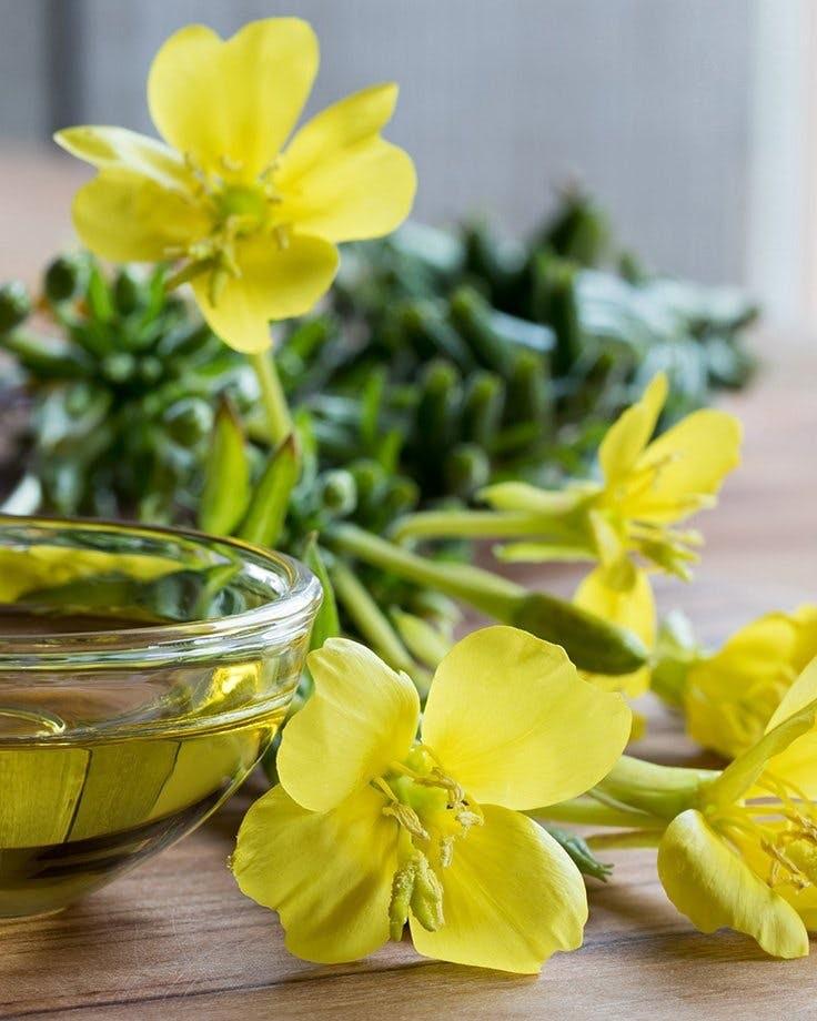 Natural Plant Remedies - Evening Primrose Oil