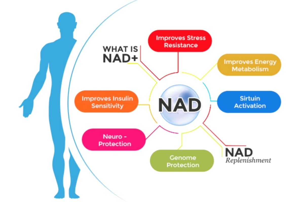 What's The Hype Of NAD+ About And Should Older Adults Be Supplementing It? - Fitneass