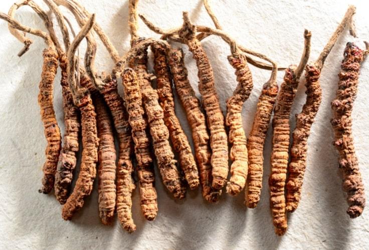 Cordyceps Mushroom To Refill Your Jing