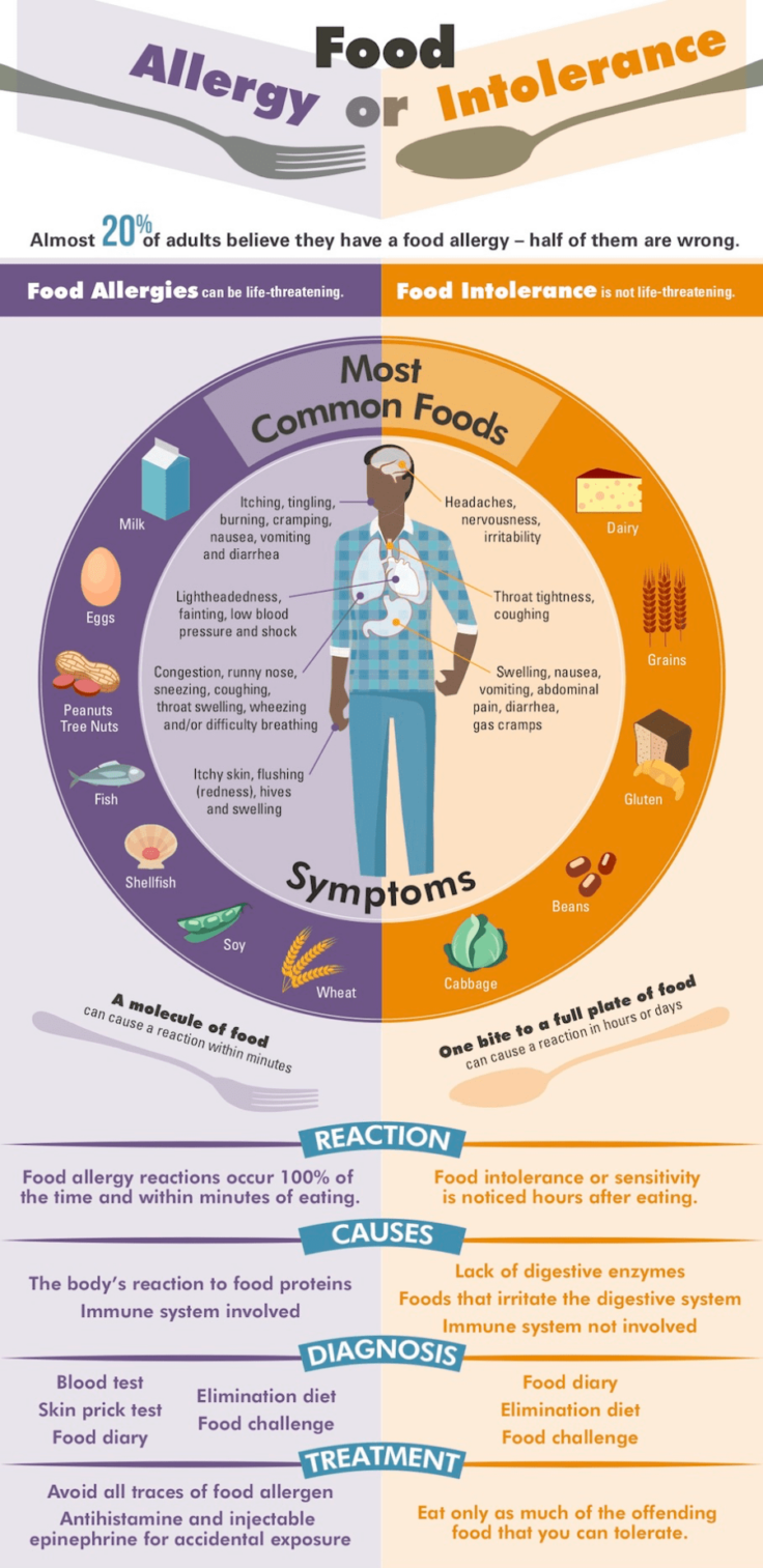 Food Allergy Or Intolerance - Inforgraphic