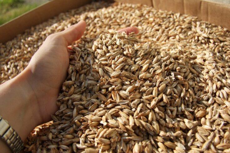 Protein Sources For Vegans - Spelt